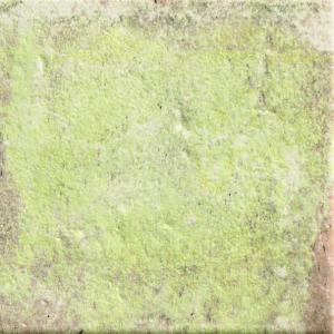 Natucer Tempo Moss 11x11